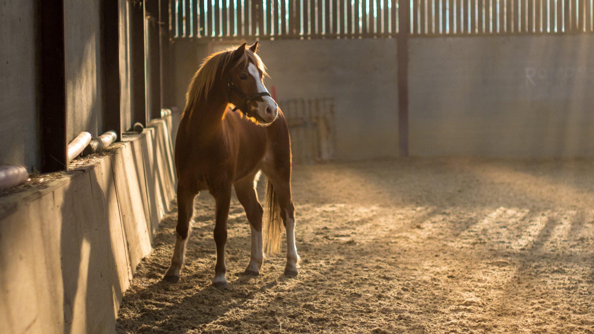 Maneggi e gite a cavallo